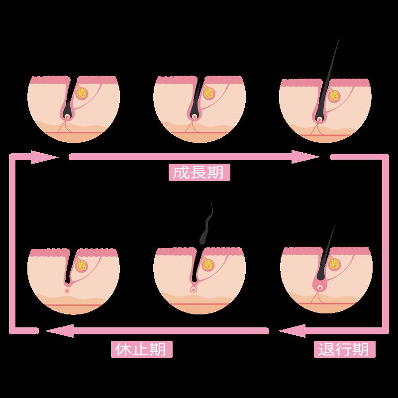 産後の抜け毛とヘアサイクルの関係