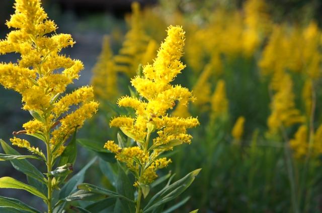 花粉によるアレルギー